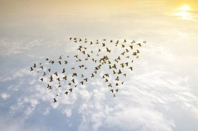 An image of a flock of birds forming a large arrow